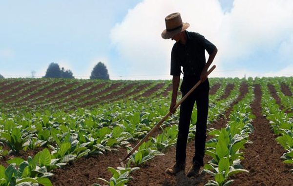 genç çiftçi projesi, genç çiftçi projesi nedir, genç çiftçi projesine kimler başvurabilir