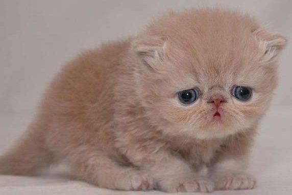 süt dökmüş kedi, süt dökmüş kedi sendromu nedir